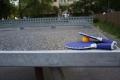 Weronika Daniluk SP 53 Ping pong_800x533